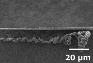 クモの糸x1000.png