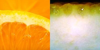 柑橘光学.jpg