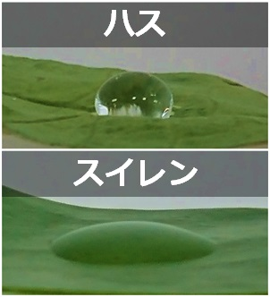 水滴比較.jpg