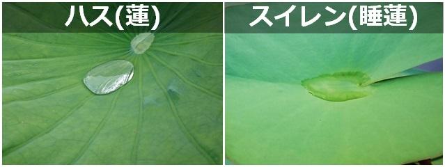 水滴比較2.jpg