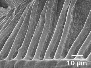 鰓弁x1000.jpg